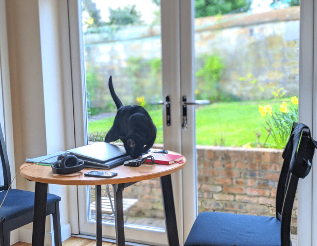 andy-cat-working-from-home